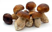 Porcini Mushrooms Frozen 2.2 lbs.